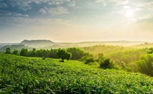 Pictures Hill Fog Tea plantation