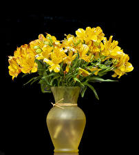 Picture Alstroemeria Black background Vase Yellow Flowers