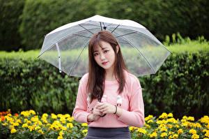 Hintergrundbilder Asiaten Sweatshirt Regenschirm Blick junge Frauen