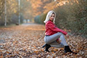 Bilder Herbst Blondine Jacke Jeans Posiert Blattwerk Starren Alessandra junge Frauen