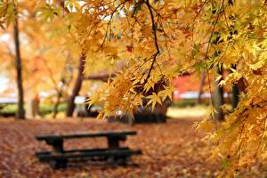 デスクトップの壁紙、、秋、枝、カエデ、ボケ写真、ベンチ、