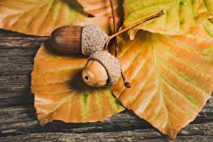 デスクトップの壁紙、、秋、クローズアップ、木の葉、ドングリ、自然