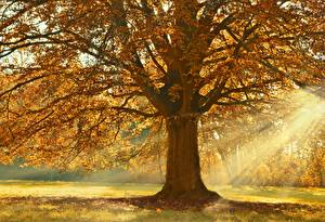 Wallpapers Autumn Rays of light Trees Branches Linden Nature