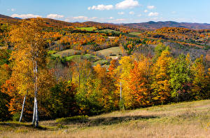 Photo Autumn USA Forest Trees Hill Vermont Nature