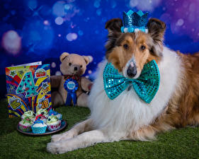 Images Birthday Dog Crown Teddy bear Fairy cake Collie Bow tie animal