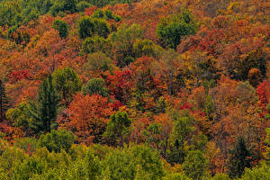 Photo Canada Autumn Parks Trees Algonquin Park, Ontario Nature