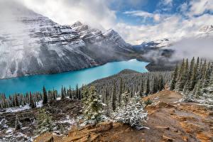 Papéis de parede Canadá Montanhas Lago Fotografia de paisagem Nuvem árvores Peyto Lake, Alberta Naturaleza imagens