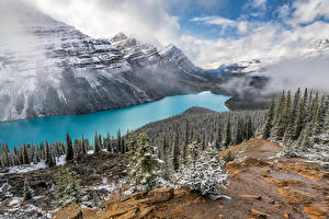 Desktop wallpapers Canada Mountain Lake Landscape photography Clouds Trees Peyto Lake, Alberta Nature