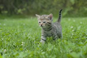 Hintergrundbilder Katzen Gras Kätzchen Unscharfer Hintergrund