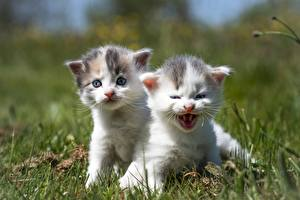 Photo Cats Grass Two Kitty cat Sweet Animals