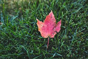 Bureaubladachtergronden Close-up Herfst Gras Een blad Natuur