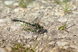 Fotos Libellen Insekten Großansicht