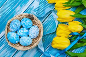 Image Easter Tulips Eggs Nest
