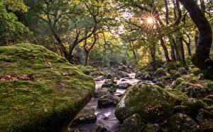 Bilder England Wälder Steine Bäche Laubmoose Devon