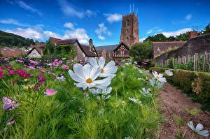 Tapety na pulpit Anglia Ogród Kosmos roślina Wieża Minehead przyroda