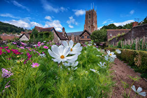 Обои Англия Сады Космея Башня Minehead