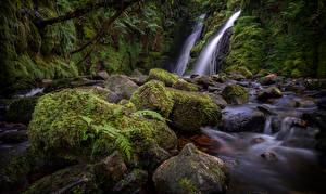 Hintergrundbilder England Fluss Stein Laubmoose Dartmoor
