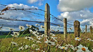 Images Fields Camomiles Fence Barbed wire Clouds Nature