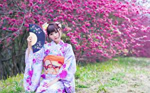 Bilder Blühende Bäume Asiaten Bokeh Kimono Braune Haare Fächer Blick Japanese Mädchens