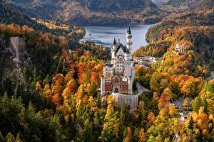 Wallpaper Germany Autumn Forests Castles Neuschwanstein Lake Tower Bavaria Schwansee Nature