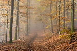 Wallpapers Germany Autumn Forests Morning Fog Leaf Rheinland-Pfalz Nature