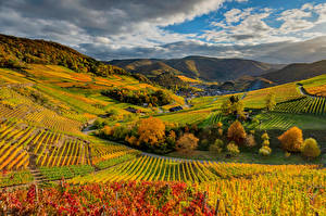 Image Germany Autumn Vineyard Clouds Hill  Nature