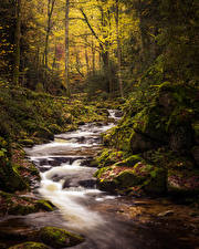 Wallpaper Germany Forests Autumn Stones Bavaria Stream Moss Black Forest Nature