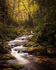 Bilder Deutschland Wälder Herbst Steine Bayern Bach Laubmoose Black Forest