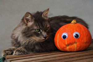 Picture Halloween Cat Pumpkin