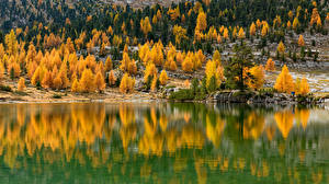 Images Italy Autumn Lake Trees Reflection South Tyrol Nature