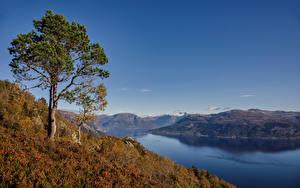 Tapety na pulpit Norwegia Jesienne Drzewa Hardangerfjorden