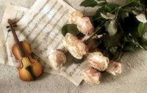 Images Notes Musical Instruments Violin Bouquets Rose Flowers