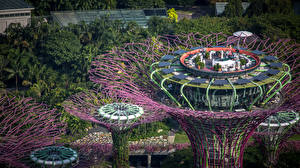 Wallpaper Singapore Park Design Cafe Palm trees From above Skypark Nature