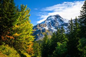 Wallpapers Switzerland Autumn Mountain Alps Trees Gryon Nature