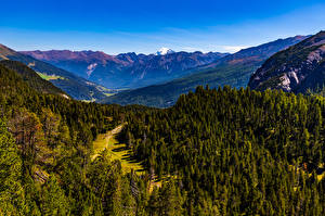 Picture Switzerland Mountain Forest Alps  Nature
