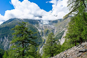 Bilder Schweiz Gebirge Alpen Wolke Fichten Randa Natur