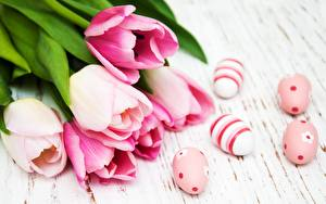Picture Tulips Easter Pink color Eggs
