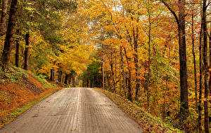 Photo USA Autumn Forest Roads Trees Rose Hill, Virginia Nature
