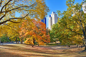 Pictures USA Autumn Park New York City Trees Leaf Central Park Nature
