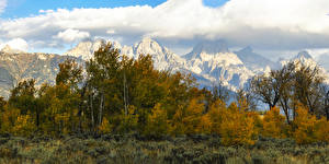 Photo USA Parks Autumn Mountains Trees Bush Grand Teton National Park Nature