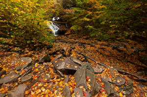 Images USA Parks Autumn Stone Leaf Streams Ricketts Glen Nature