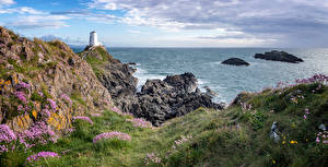 Pictures United Kingdom Coast Lighthouses Sea Wales Cliff Grass Anglesey Nature
