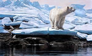 Hintergrundbilder Wasser Ein Bär Eisbär Gezeichnet Tiere