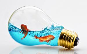 Image Water Fish Creative Light bulb Gray background Animals