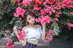 Wallpaper Asiatic Flowering trees Pose Glance Brown haired Girls