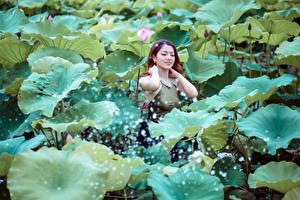 Fotos Asiaten Lotus Braunhaarige Blattwerk Mädchens