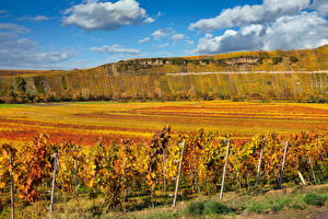 Pictures Autumn Germany Fields Vineyard Hill Shrubs Baden-Wuerttemberg