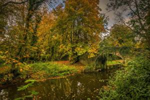 Fondos de escritorio Otoño Irlanda Puente árboles Canal Boyne Valley Naturaleza