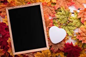 Fondos de escritorio Otoño Acer planta Corazón Tarjeta de felicitación de la plant