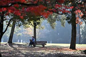 Photo Autumn Parks Coronavirus Trees Bench Rest Sit Nature